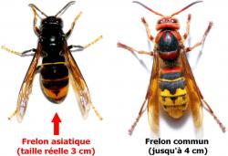 Difference frelon 1