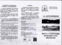 La Leptospirose