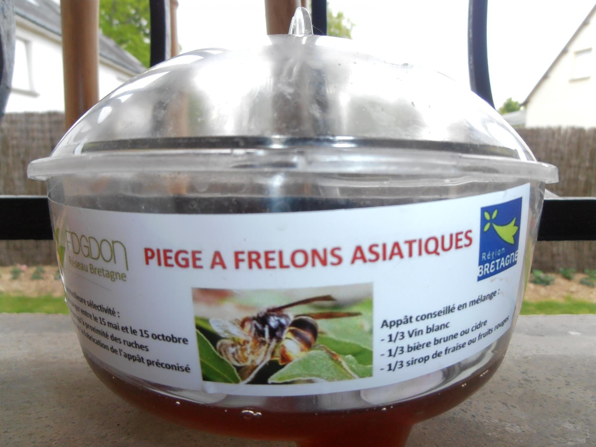 Le pi geage des reines frelon asiatique - Piege a frelon ...