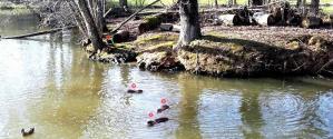 Photo de 4 ragondins pland eau de betton
