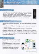 Ragondin leptospirose 2